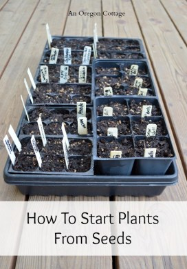Vegetable Garden 101: How to Start Plants from Seeds