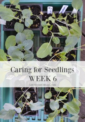 Vegetable Garden 101: Caring for Seedlings at Week 6