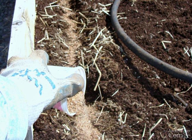 Preparing rows for planting seedlings