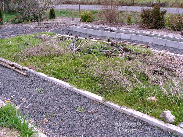 Planting a Garden No-Till Vegetable Bed after winter, before plastic