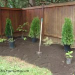 8 Easy Steps To A New Shrub and Flower Bed