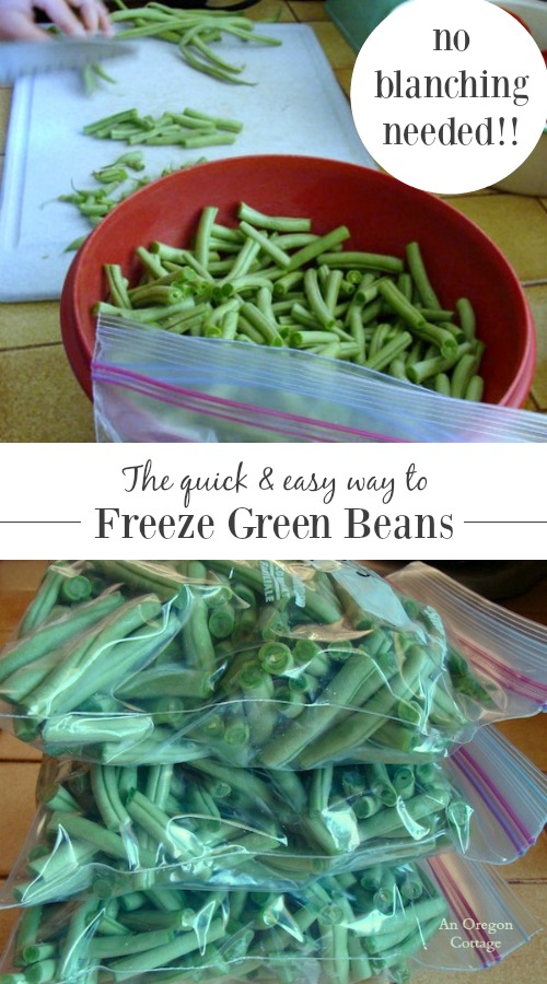 Think you need to blanch green beans before freezing? Our family did a test and we like them better without cooking before freezing AND it's a LOT easier, too! Click to see how to freeze your green beans without blanching them plus tips and cooking ideas.