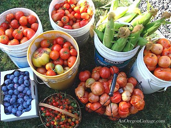 late September Harvest