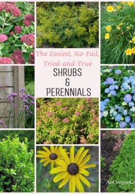 Easy Care Shrubs & Perennials