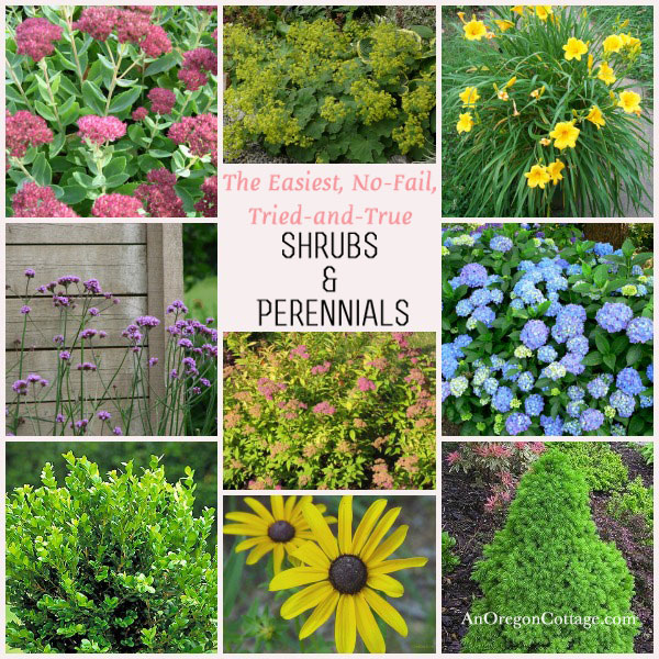 Easy care shrubs perennials for Easy to care for garden designs