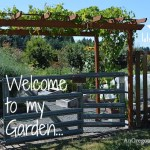 Raised Bed Vegetable Garden Tour