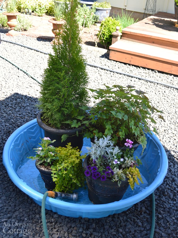 Save water and time watering for planters by using a kiddie pool for vacations
