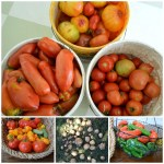 Harvest & A Bit of Sadness {TGP}