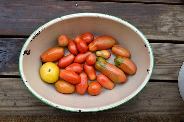 Ripening Tomatoes in Enamel Bowl