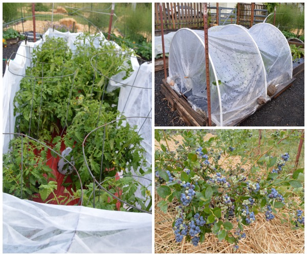 6-14 vegetable garden