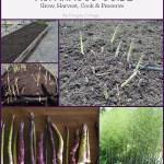 Ultimate Asparagus Guide: Grow, Harvest, Cook & Preserve