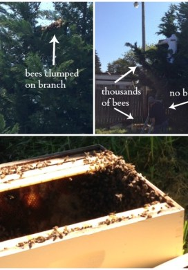 Three Things 4.25.15: Bees, Flowers & Best Mop