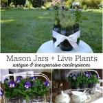 Easy Mason Jar Flower Arrangements with Live Plants