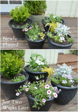 Three Things 6.06.15: Planting, More Planting, & The BEST Spice