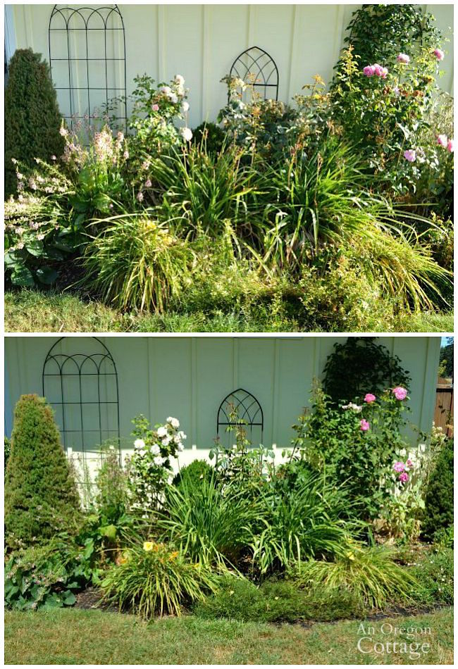 Ways to add curb appeal in late summer- trim plants in beds and borders