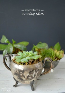 Succulents in Vintage Silver {for gifts or decor}