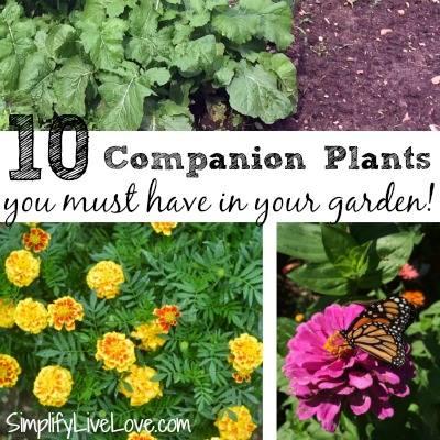 Companion Plants via Simplify Live Love