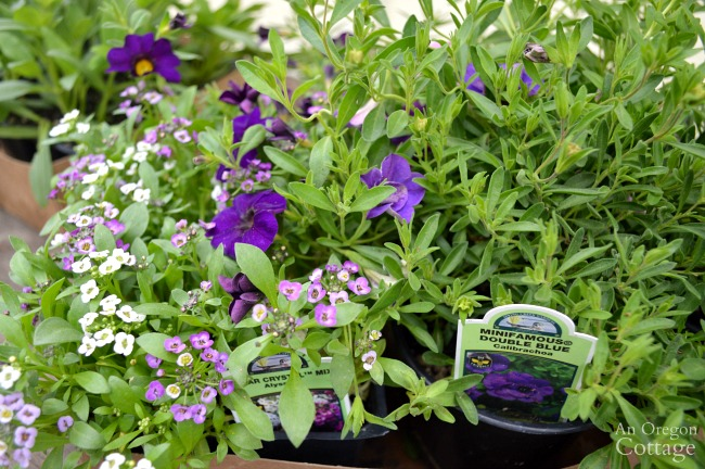 Easy Garden Tips-create containers that thrive