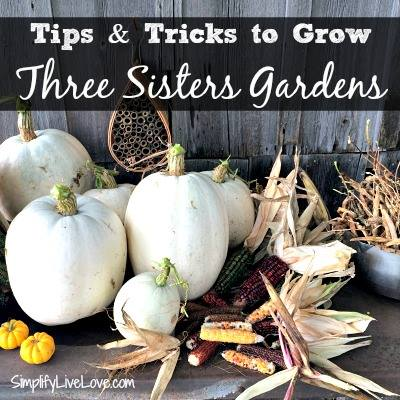 How to Grow a Three Sisters Garden via SimplifyLiveLove