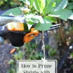 How To Prune With Confidence