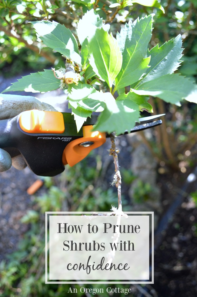 How to prune shrubs with confidence for healthier plants and more blooms!