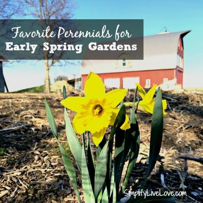 Perennials for Early Spring via SimplfyLiveLove