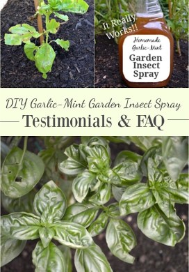 DIY Garlic-Mint Garden Insect Spray Testimonials & FAQs