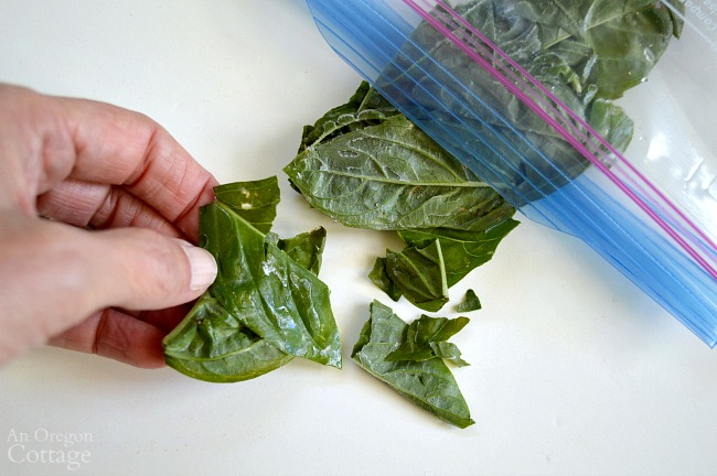 Freezing Basil Leaves-breaking off frozen basil in bag