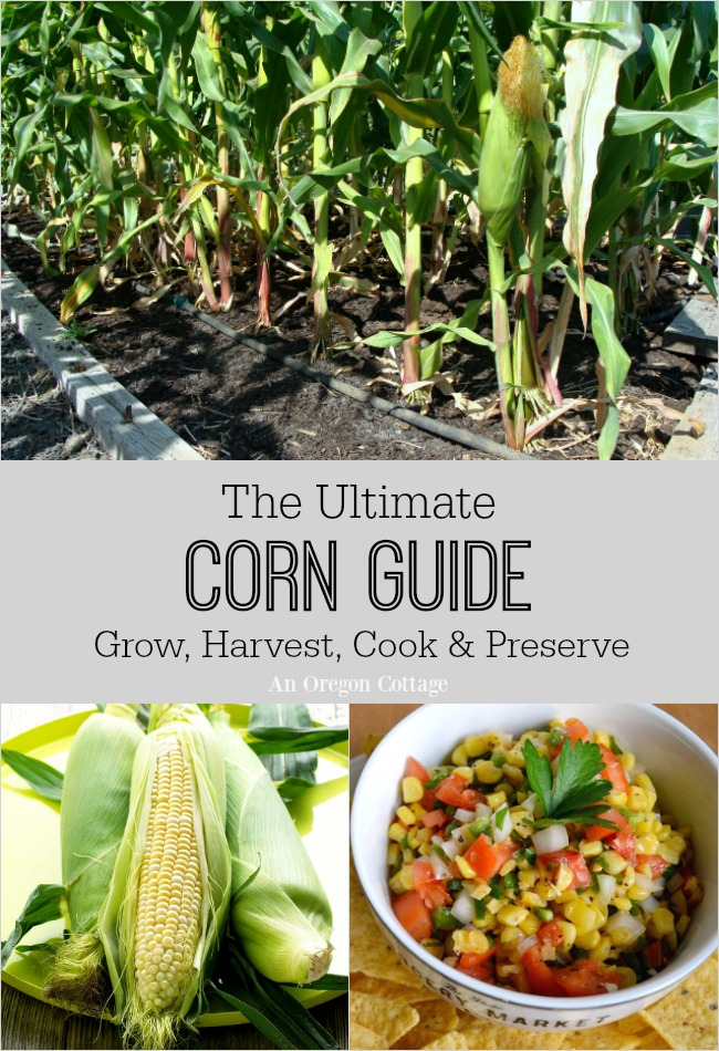 The Ultimate Corn Guide-grow harvest cook and preserve the season's best corn