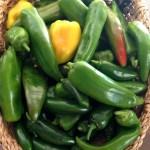 Three Things 9.10.16: Pepper Harvest, Sing Street, Good Bra + Links