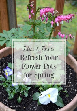 Ideas & Tips to Refresh Your Flower Pots For Spring {Tuesdays In The Garden}
