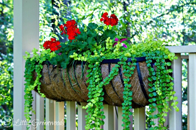 hanging-container-garden via 3 little greenwoods