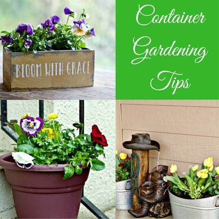 Container gardening tips at Homemade Food Junkie