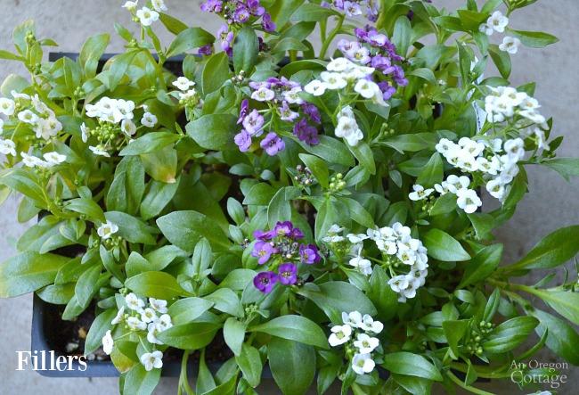 Flower Pot Design for Sun-sweet alyssum filler