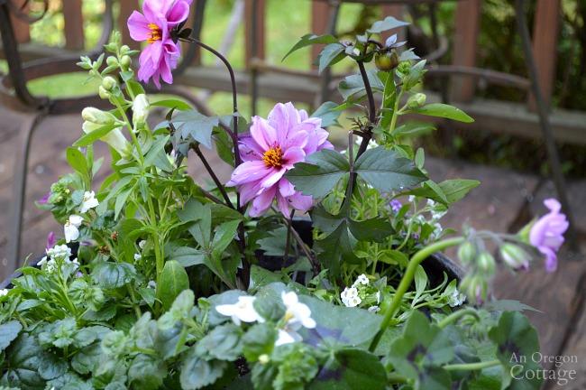 Garden center Flower Pot Design for Sun