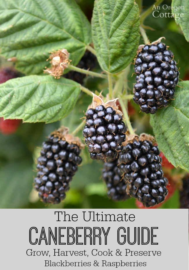 The Ultimate Caneberry Guide-growing, harvesting, cooking, and preserving raspberries and blackberries