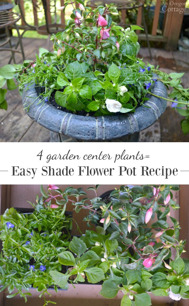 Use 4 basic, affordable garden center plants to create this beautiful flower pot designed for shade.