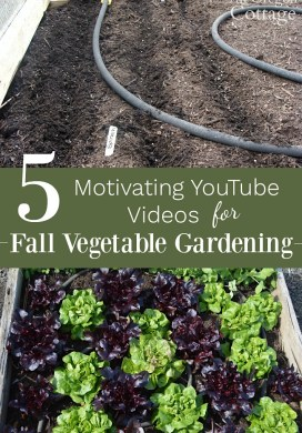 Fall Gardening Ideas: 5 Motivating Videos for Vegetables