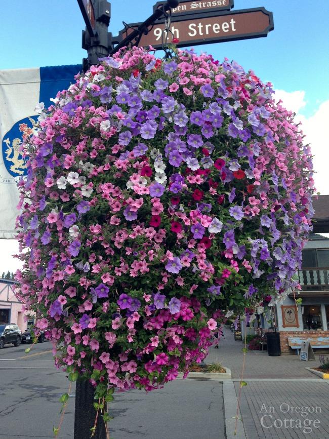 Leavenworth WA flowers-hanging petunias