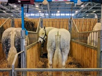 salon-de-lagriculture-horses-chevaux