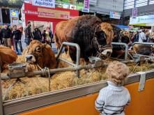 salon-de-lagriculture-kids-cows