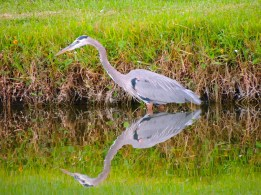 Reflected glory of Mr. GBH