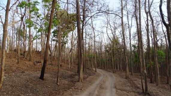 A jungle track