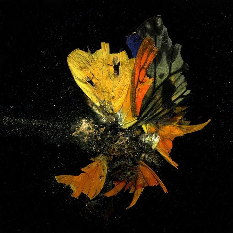 Mat Collishaw AnOther