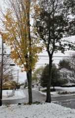 fall trees and snow
