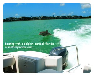 Wordless Wednesday: Boating with a Dolphin, Sanibel, Florida