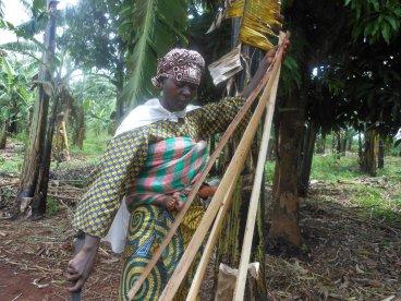 Angelique Karidi, a farmer, extracts banana fiber from the trunk of a banana tree.