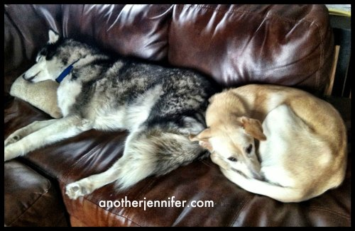 kona and hana on the couch