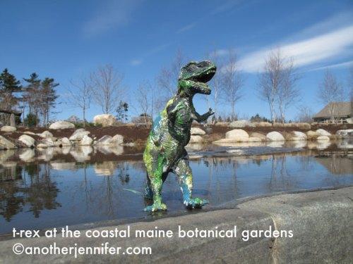 t-rex at the coastal maine botanical gardens