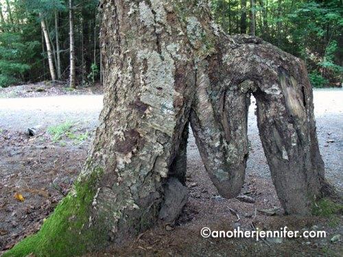 m tree